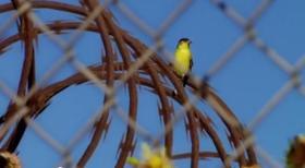 Bird_Freedom